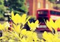 Литературная прогулка на красном автобусе