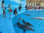 Какой дельфинарий лучше в анапе – Анапский дельфинарий — обзор достопримечательности